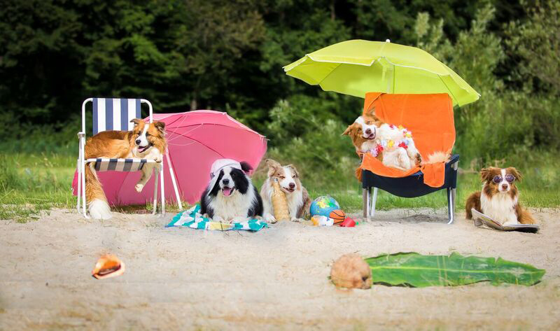 files/user_uploads/hunde/Bilder fuer news/beach.jpg