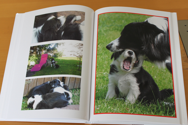 files/user_uploads/hunde/Bilder fuer news/buch.jpg
