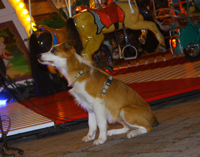 files/user_uploads/hunde/Bilder fuer news/dez0152.JPG