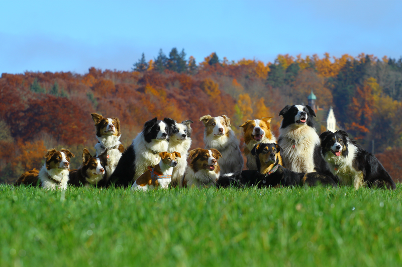 files/user_uploads/hunde/Bilder fuer news/hundeherbst2015.jpg
