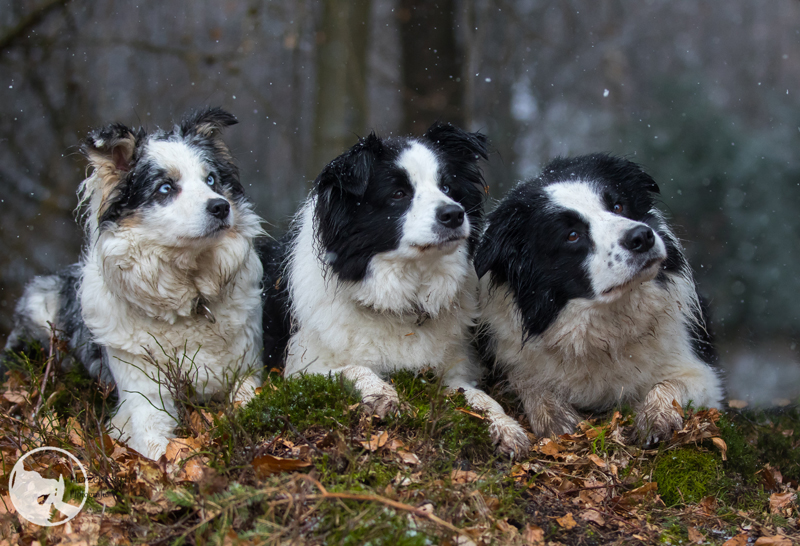 files/user_uploads/hunde/Bilder fuer news/jan-trio.jpg