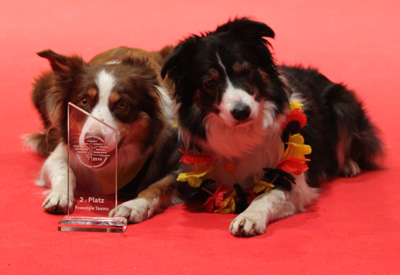 files/user_uploads/hunde/Bilder fuer news/my stars2014.jpg