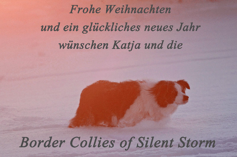 files/user_uploads/hunde/Bilder fuer news/xmas.jpg