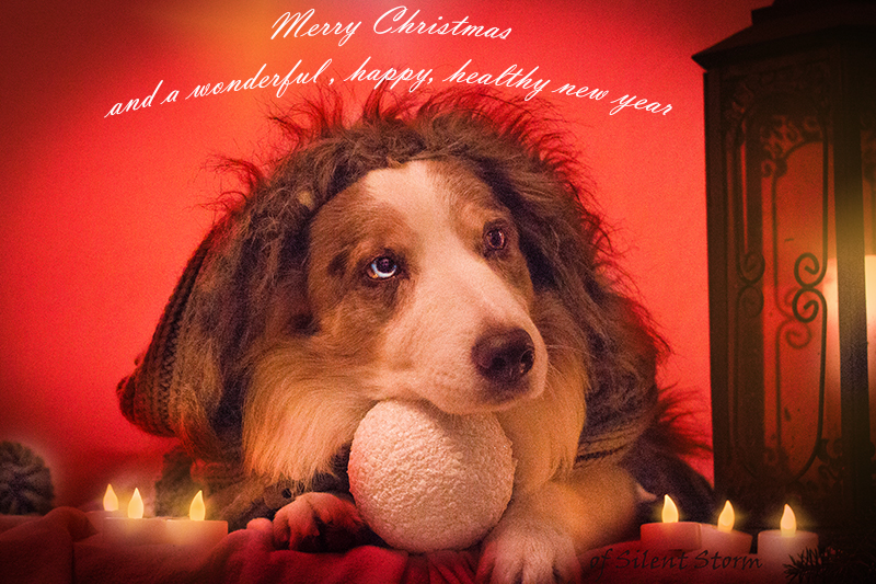 files/user_uploads/hunde/Bilder fuer news/xmassmile.jpg