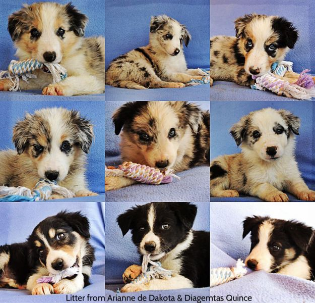files/user_uploads/hunde/rueden/smile/nachzucht Smile/Smile-puppies-spain.jpg